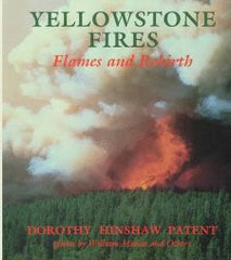 Yellowstone Fires: Flames & Rebirth