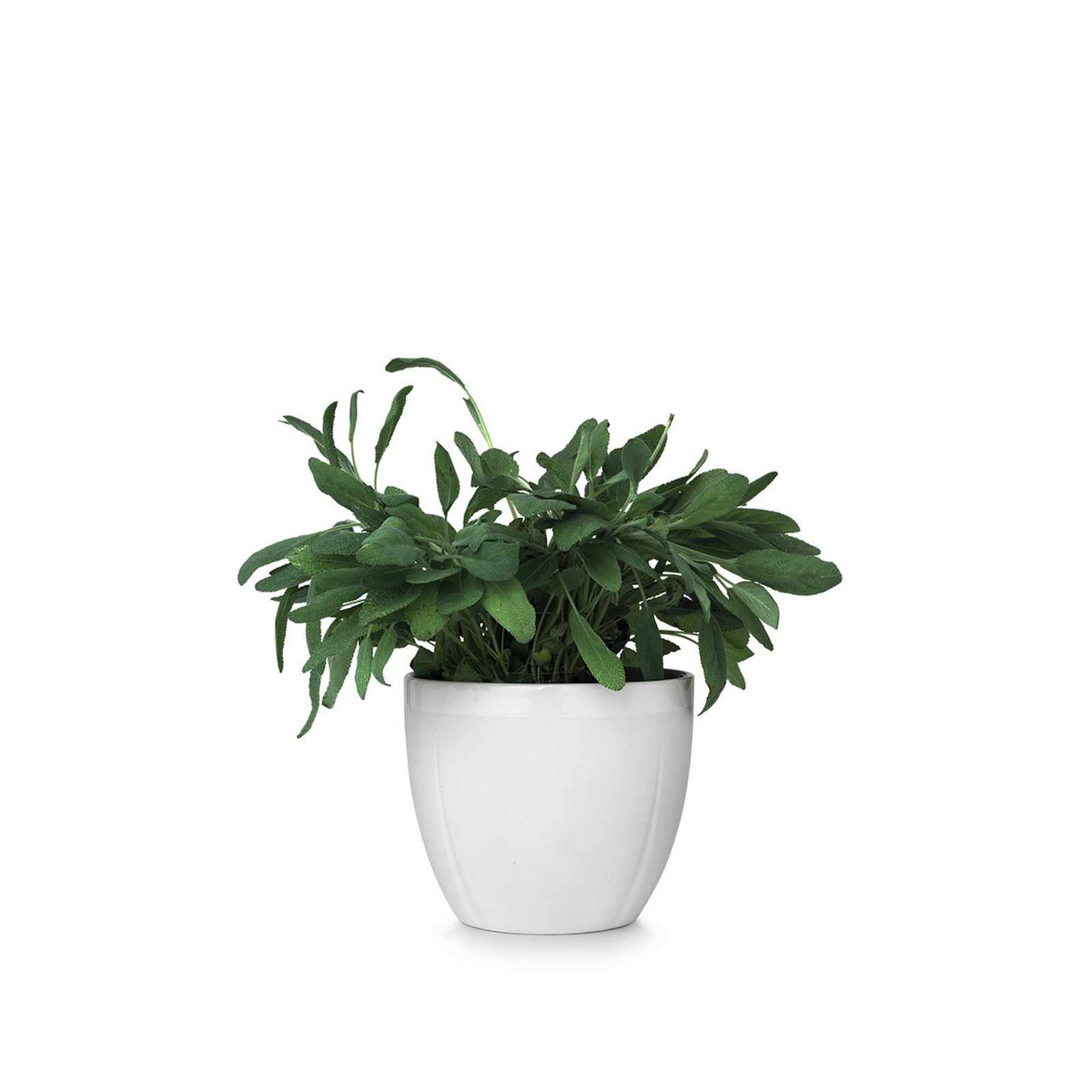 Grand Cru Flower Pot, White, 5.5""