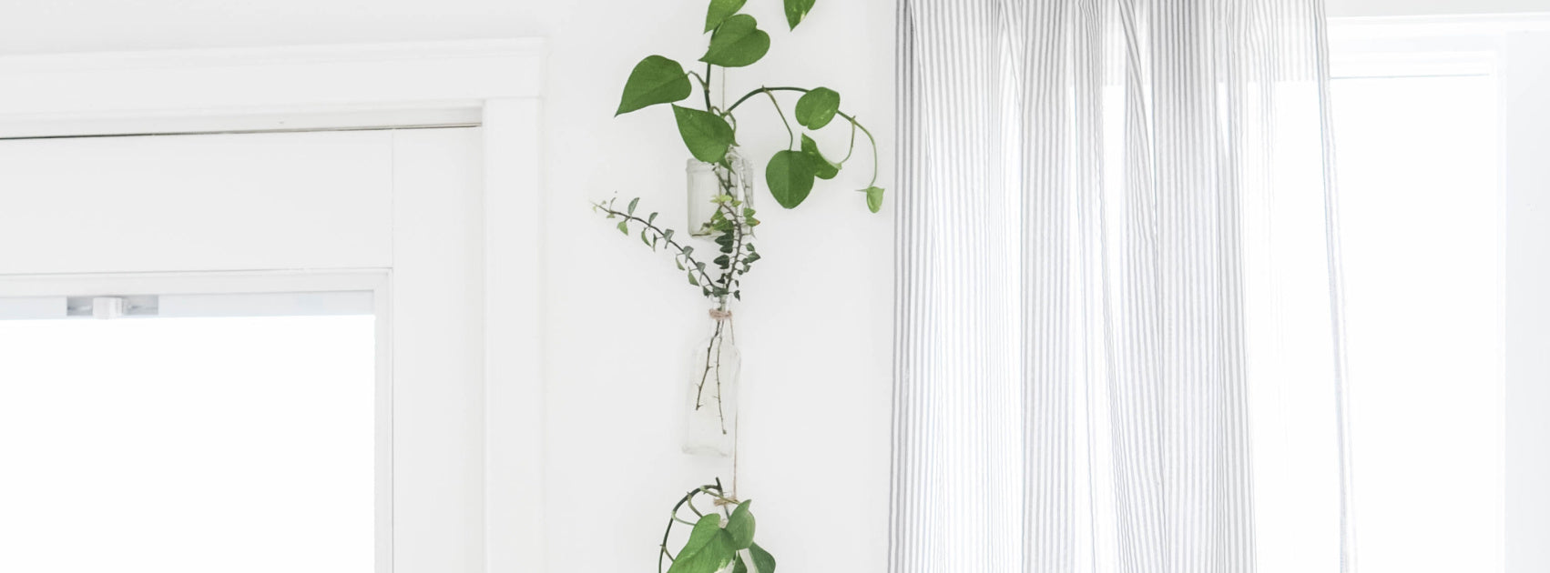 DIY Plant Wall Hanging