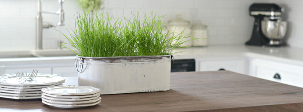 Easy Wheat Grass Centerpiece Idea