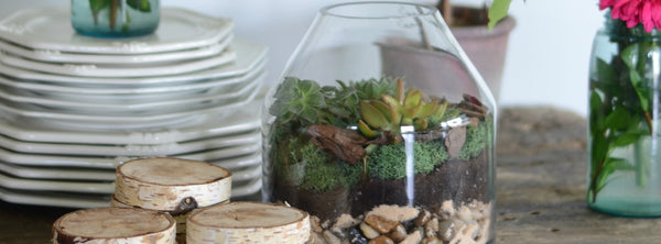 Terrarium DIY {Mother's Day Gift Idea}