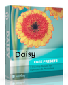 Free Lightroom Presets: Daisy