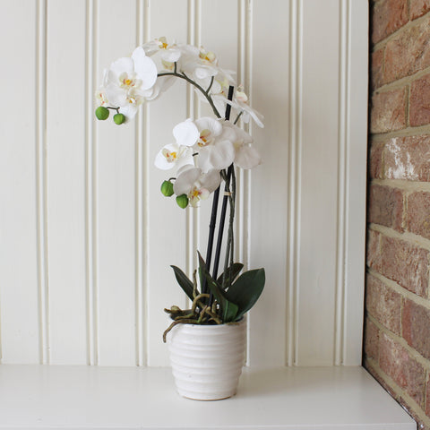 Luxury Artificial Small Orchids in Ribbed Ceramic Pot