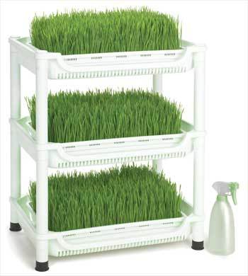 Sproutman Wheatgrass Grower: Triple tier, soil free