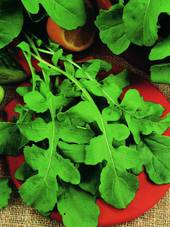 Seeds - ORGANIC Rocket: 100gm or 600gm