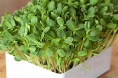 Sunflower seeds for sprouting/microgreens 90g