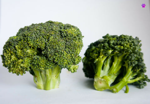 broccoli-Touttousshop