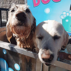 Two Dogs in Dog Wash