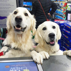 Two Dogs Instore at Counter