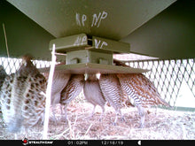 Load image into Gallery viewer, Quail Safe Feeder