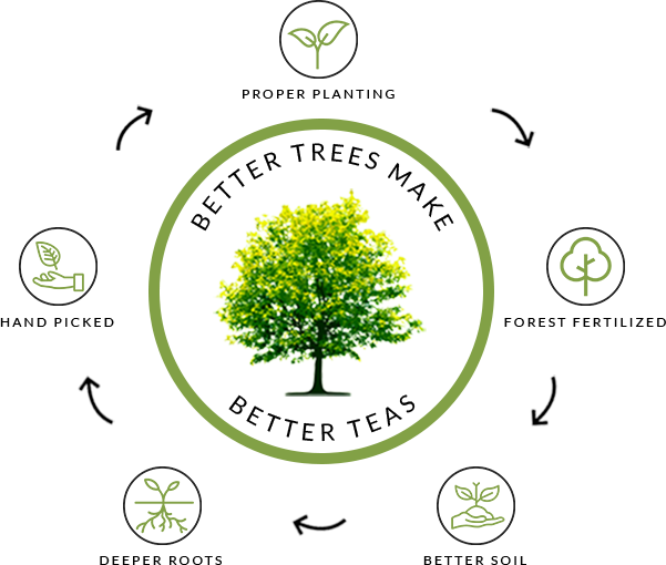 Steps to making better trees: Proper Planting, Forest Fertilized, Better Soil, Deeper Roots, Hand Picked