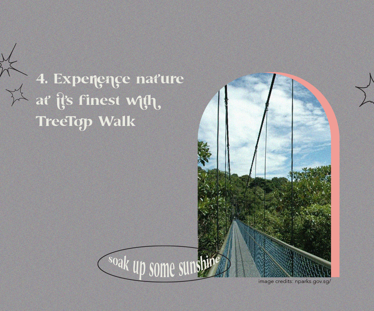 Experience nature at its finest with TreeTop Walk