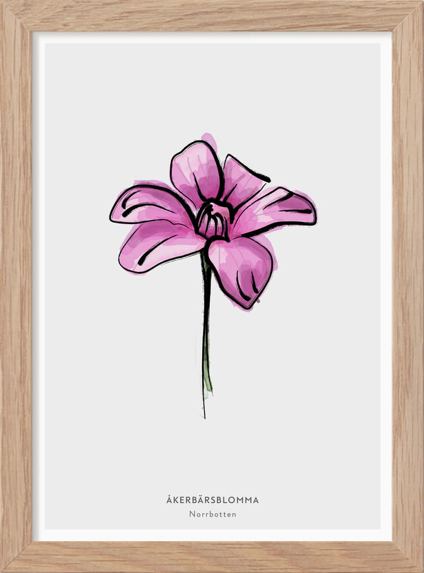 "The province flower of Norrbotten ""Åkerbärsblomma"" - In Swedish - Mini print"