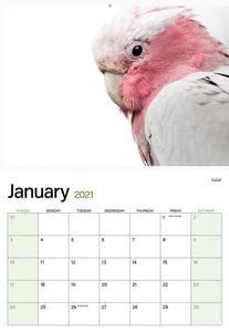 2021 native bird calendar
