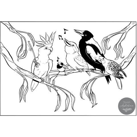 Free Australian colouring in pages Native Australian Birds Stylish Australiana