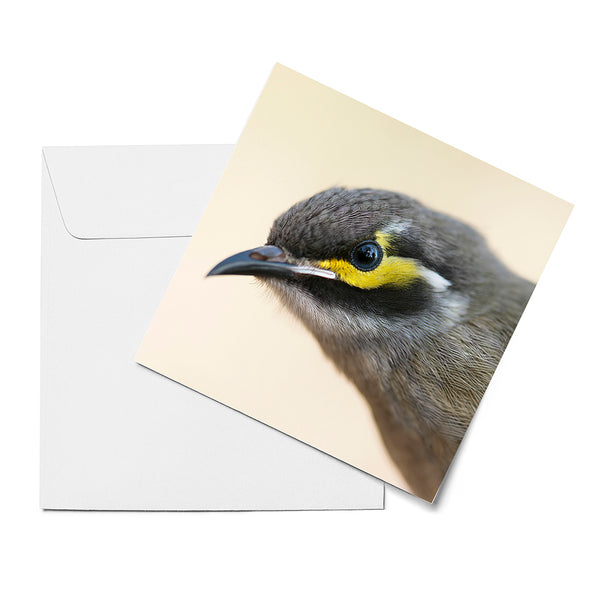 'Little birds' greeting cards (set of 6)