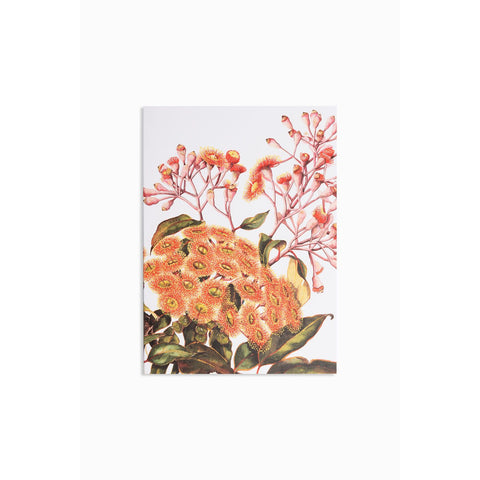 Greeting card - red flowering gum - Stylish Australiana - Ethical Australian Gifts and Souvenirs