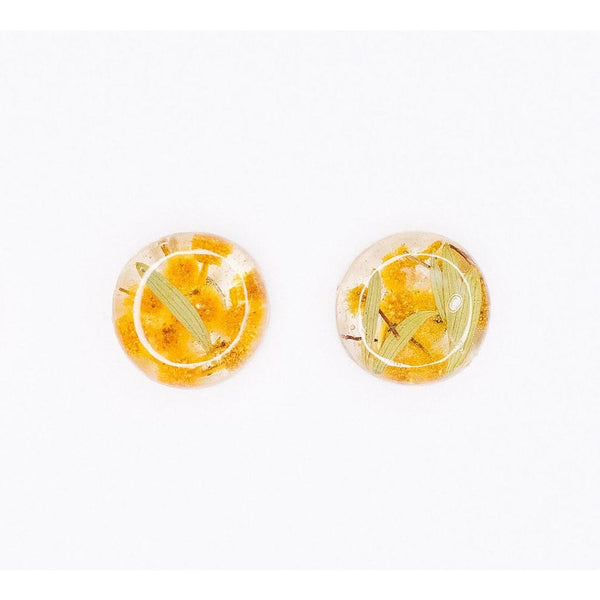 Wattle in resin - stud earrings with Australian wattle flower