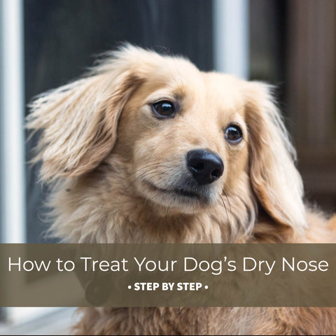 how to treat your dog's dry nose step by step