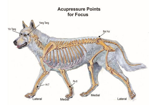 canine acupressure points