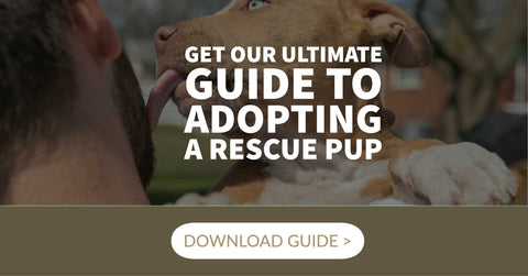 ultimate guide to adopting a rescue pup