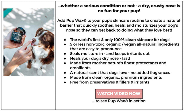 watch Pup Wax heal dry dog noses fast