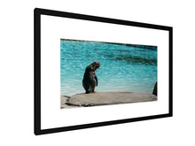 Load image into Gallery viewer, Framed print - Smooth - Penguin