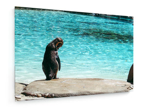Poly Canvas Print - Penguin