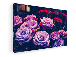 Stretched Canvas Classic – Premium - Roses