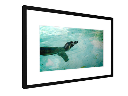 Framed print - Smooth - Penguin