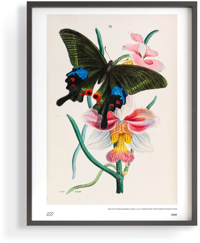 Butterfly in poster frame