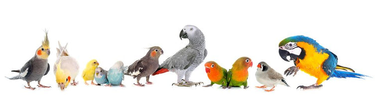 Bird and Parrot Store
