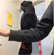 Red Tailed Black Cockatoos for Sale