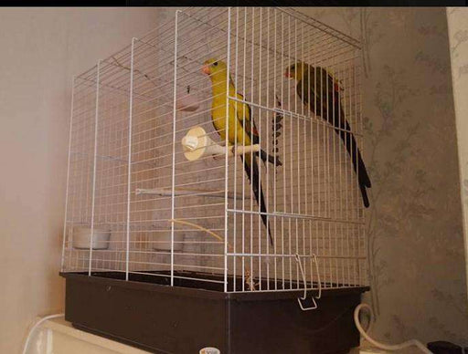 Rock Pebbler Parakeets for Sale