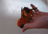 Baby sun Conure - Macaws and Parrots For sale
