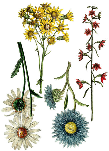 IOD Decor Transfer - Wildflower Botanicals 24 x 33