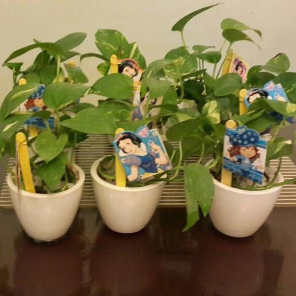 G13 - Money Plant (Customised for children)