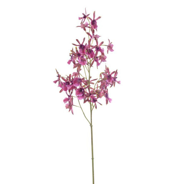 Wild Oncidium Orchid Stem Purple 41''