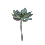 Sword Leaf Echeveria Succulent Small