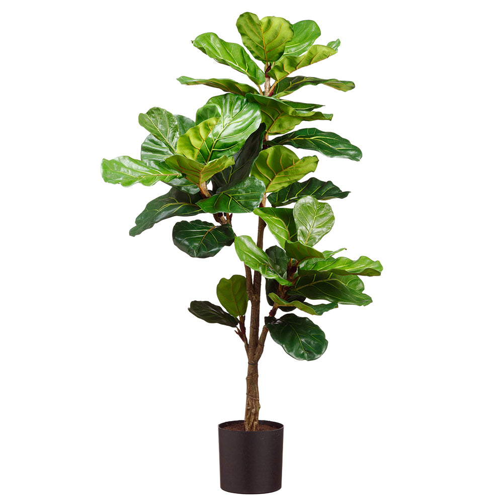 Fiddle Leaf Fig Heirloom Tree 56""