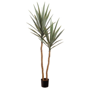 Yucca Double Tree 52""