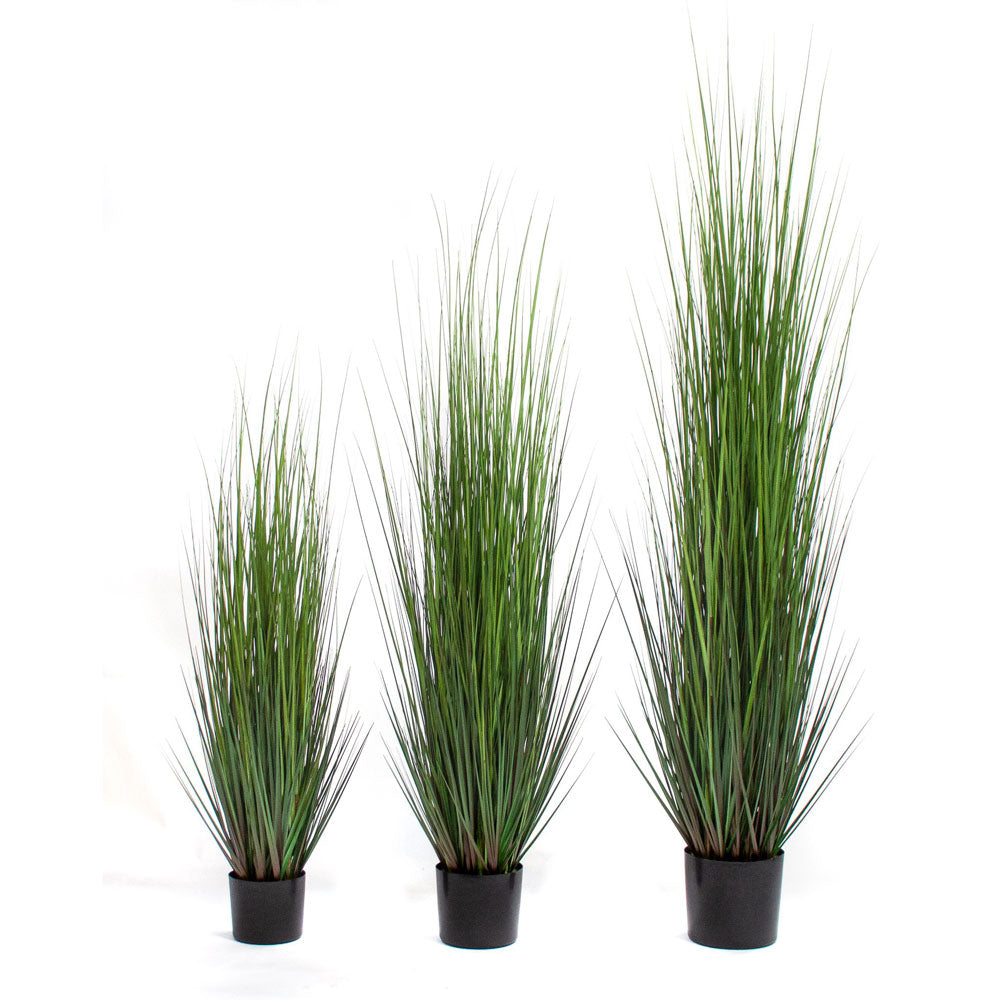 Dune Grass Potted