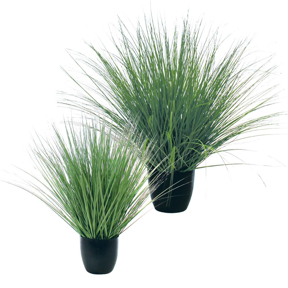Green River Grass Potted