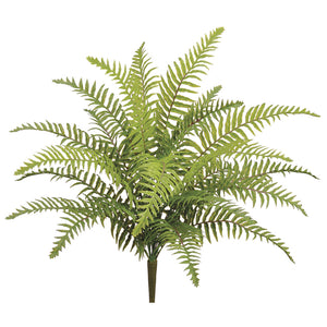 Mini Boston Fern 22""