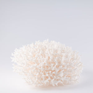 birdsnest coral buy birdsnest coral decorating with birdsnest coral