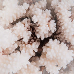 brown stem coral buy brown stem coral decorating with brown stem coral