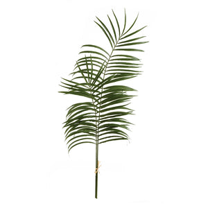 Kentia Palm Leaf