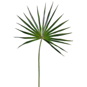 Fan Palm Small