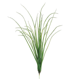 Juncea Air Plant