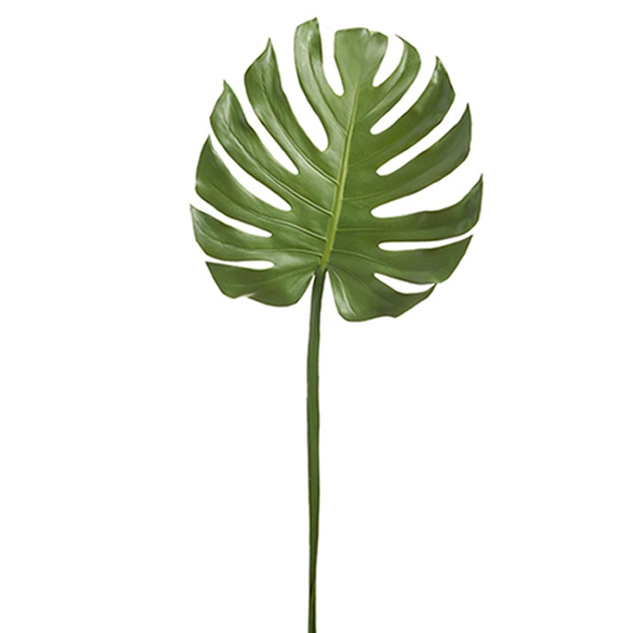 Monstera Leaf Large